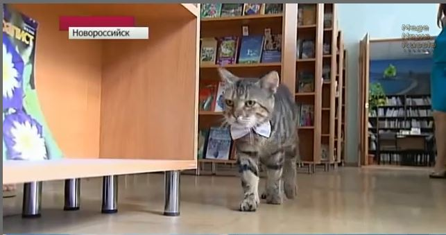 russian library cat
